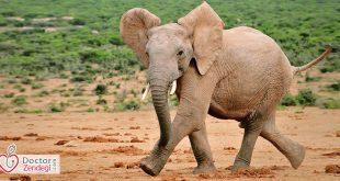 فیلی که گریخت - دکتر زندگی
