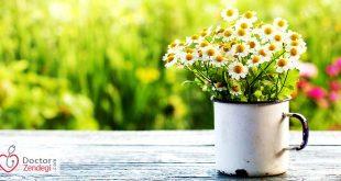 فروردین مهربان لطفا بهار نکویی برای مان باش - دکتر زندگی